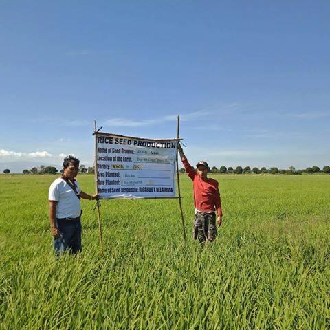 MAO, Nag-Monitor ng Palay Seed Recipients sa Pantol