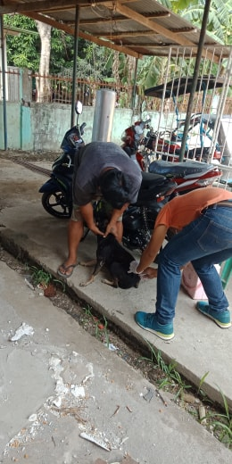 Anti-Rabies Drive in Brgy. Manambong Norte and Manambong Parte, 6.7.2019