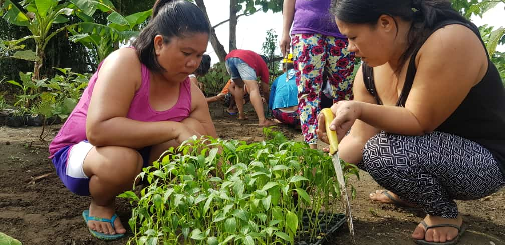 Communal Gardening Project @Brgy. Apalen, June 25, 2019