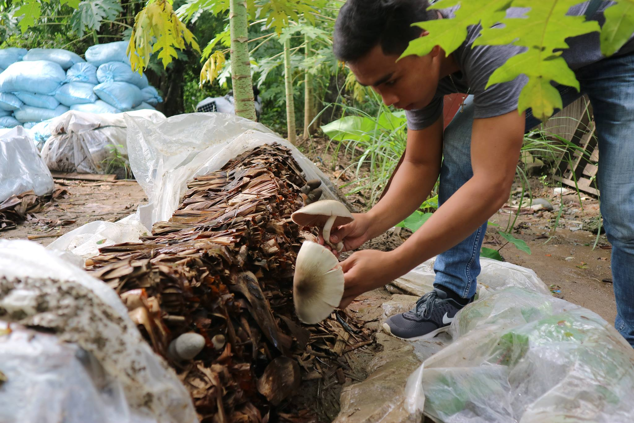 Agriculture Office's new pilot project: mushroom culture