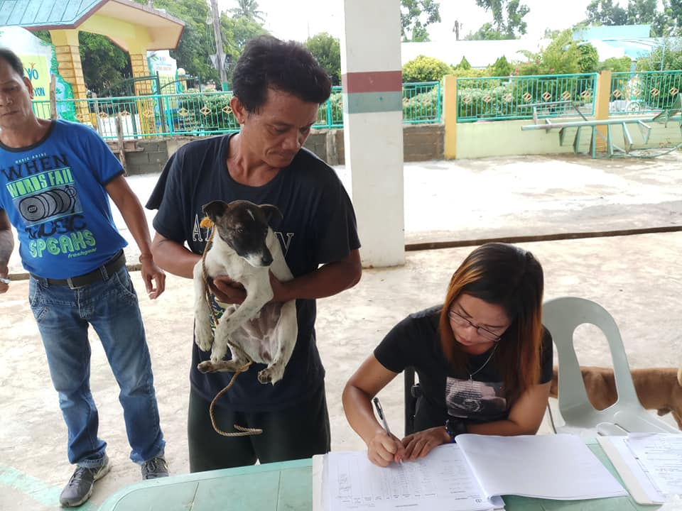 ONGOING Agriculture Office's mass vaccination of cats and dogs in Brgy. Buayaen