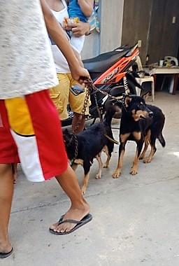 Anti-Rabies Drive, Nasa Poblacion Na