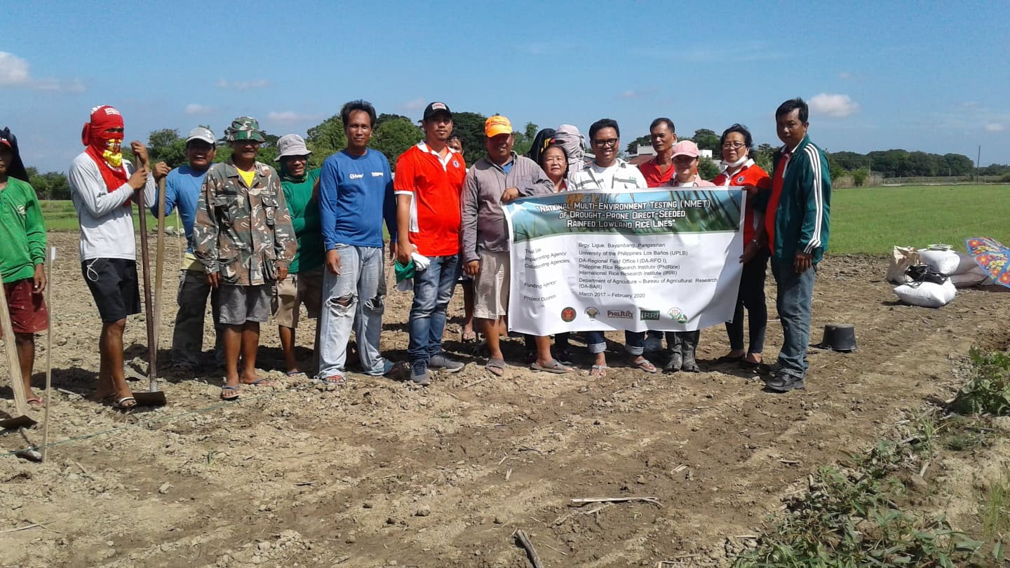 UPLB Tests Drought-Prone Lowland Rice Varieties